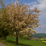 Traumhafte Natur im Weserbergland